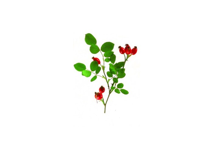 Hagebutte (Cynosbati Fructus) (Bio)